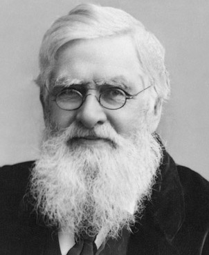 Alfred Russel Wallace - AVPH